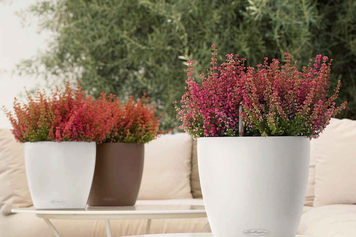 lechuza-planter-classico-color-21-672100-en